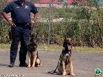 The K9 are highly trained and wait until called by their handler